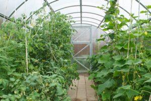 Polükarbonaadist kasvuhoone ostmine